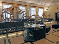 Museo Civico di Zoologia (Foto: Massimo Tomasini)