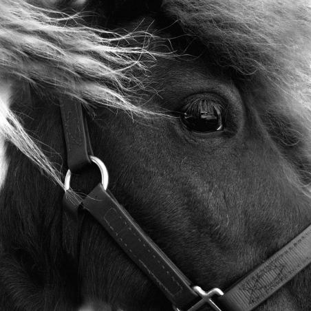 alogo I © All rights reserved_ JENNY PAPALEXANDRIS PHOTOGRAPHY