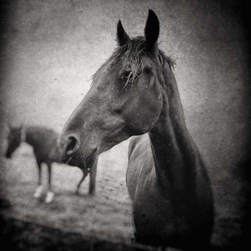 horse in rain VII © All rights reserved_ JENNY PAPALEXANDRIS PHOTOGRAPHY