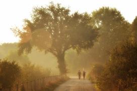 Via Francigena fra Sutri e Monterosi (foto di Patrizio Pacetti)