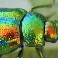 """""""Superfici"""", il mondo degli insetti al museo di Zoologia"""