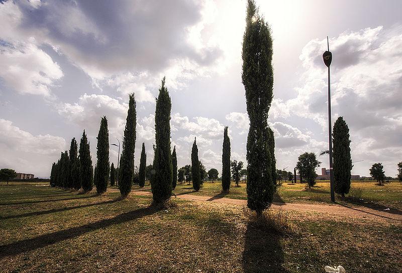 Parco_archeologico-Centocelle_Roma