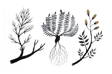 plantae-eureka-2018-roma-_andreco_plantae_h