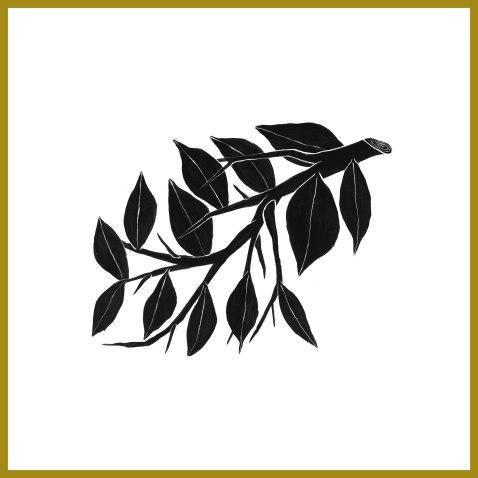plantae-eureka-2018-roma-_Disegno-Andreco-Plantae-2
