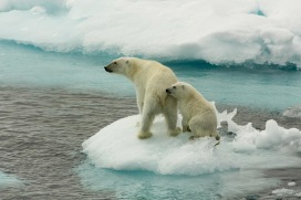 A polar bear mother and her young on sea ice, north of Svalbard. Eisbaerin mit Jungtier auf Eisscholle, noerdlich von Spitzbergen.