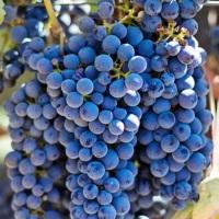 VinNatur, da Officine Farneto oltre 400 etichette di vini naturali