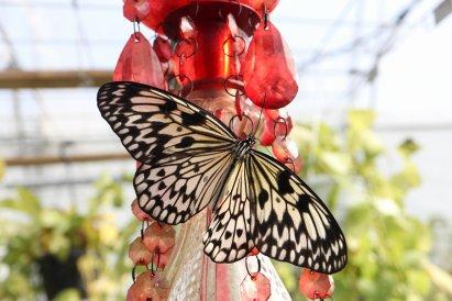 casa-delle-farfalle-3-2019