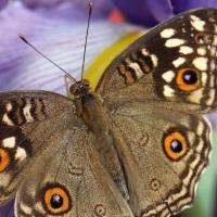 Riapre il giardino magico della Casa delle Farfalle