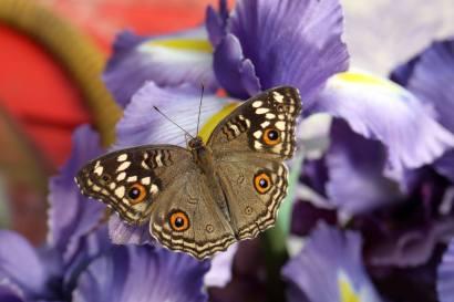 casa-delle-farfalle-4-2019