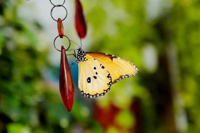casa-delle-farfalle-6-2019