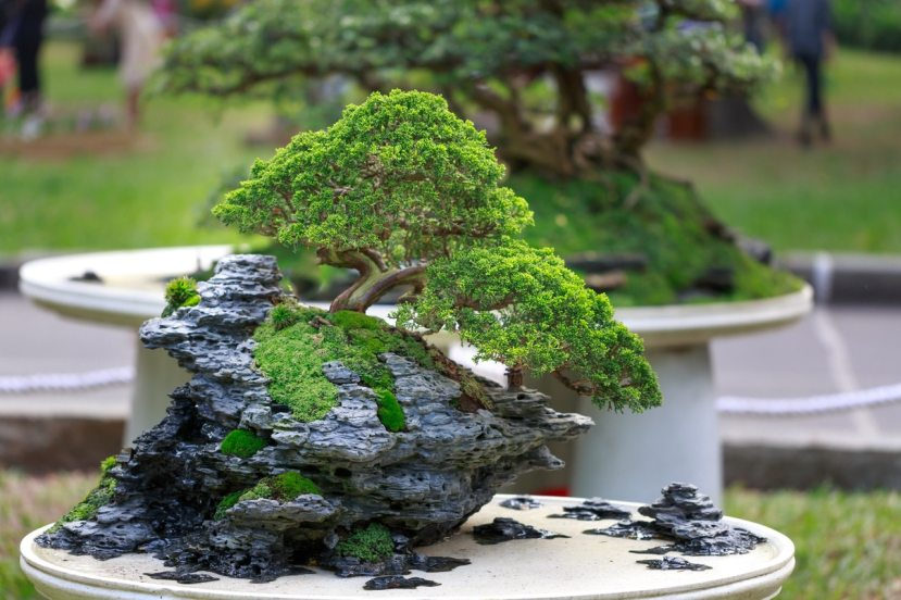 blurr-bonsai-bright-2149105