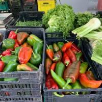Mercati contadini del V Municipio, utili per l'ambiente e per dare lavoro