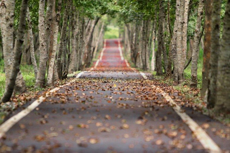 woodland-656969_1280-alberi-tree