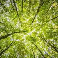 Giornata Mondiale Ambiente, mandateci le vostre foto green!