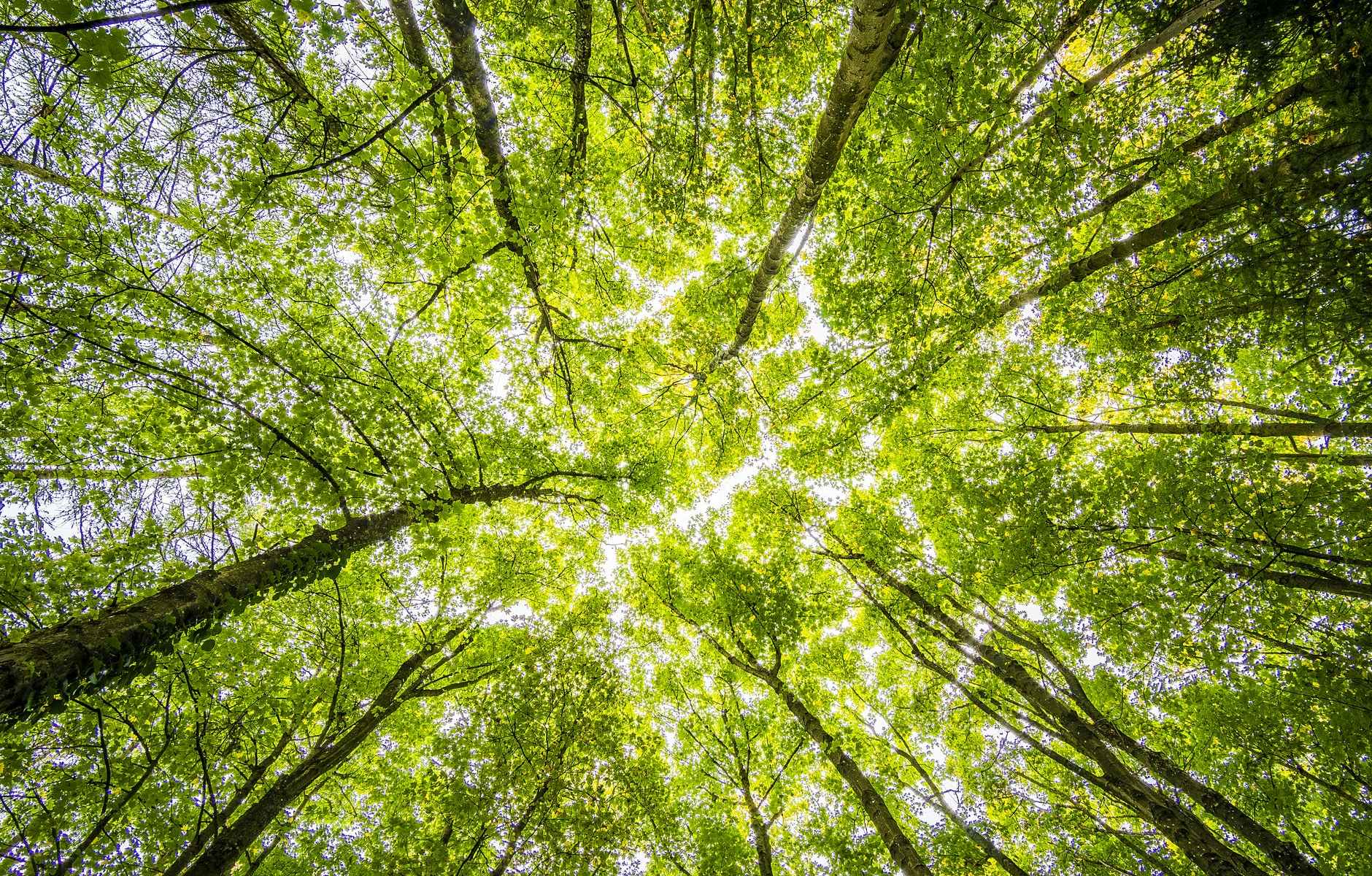 alberi-trees-verde-green