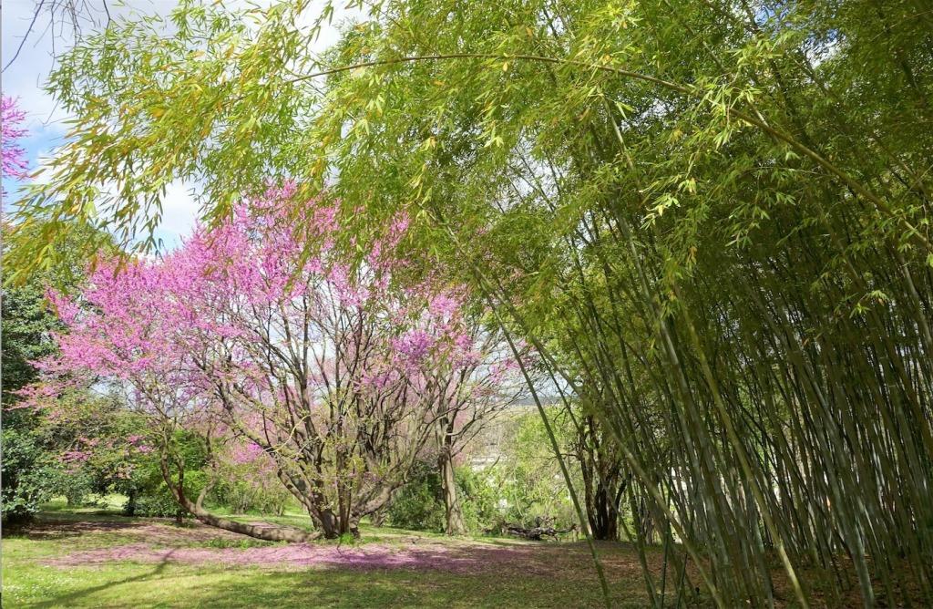 orto-botanico-roma-piante-natura-alberi-fiori-green