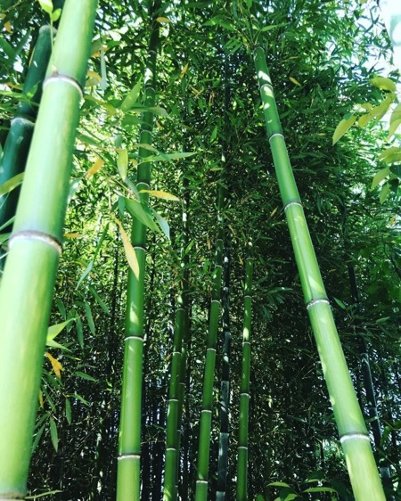giornata-mondiale-ambiente-world-environment-day-2020-green-nature-bambu