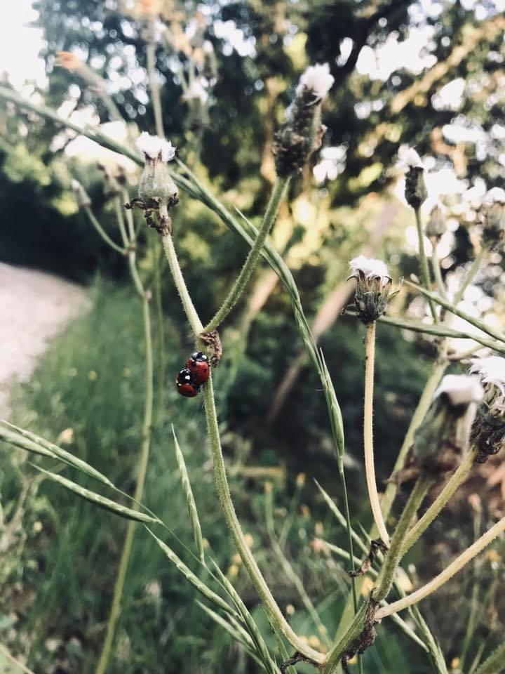 giornata-mondiale-ambiente-world-environment-day-2020-green-nature-coccinella