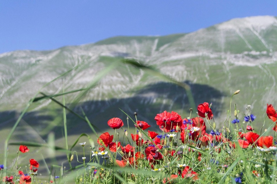 giornata-mondiale-ambiente-world-environment-day-2020-green-nature-mountain-flowers