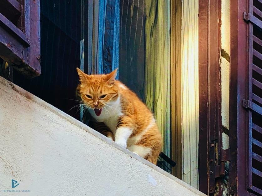 rioni-di-roma-the-parallel-vision-foto-monti-strade-monumenti-vicoli-gatto