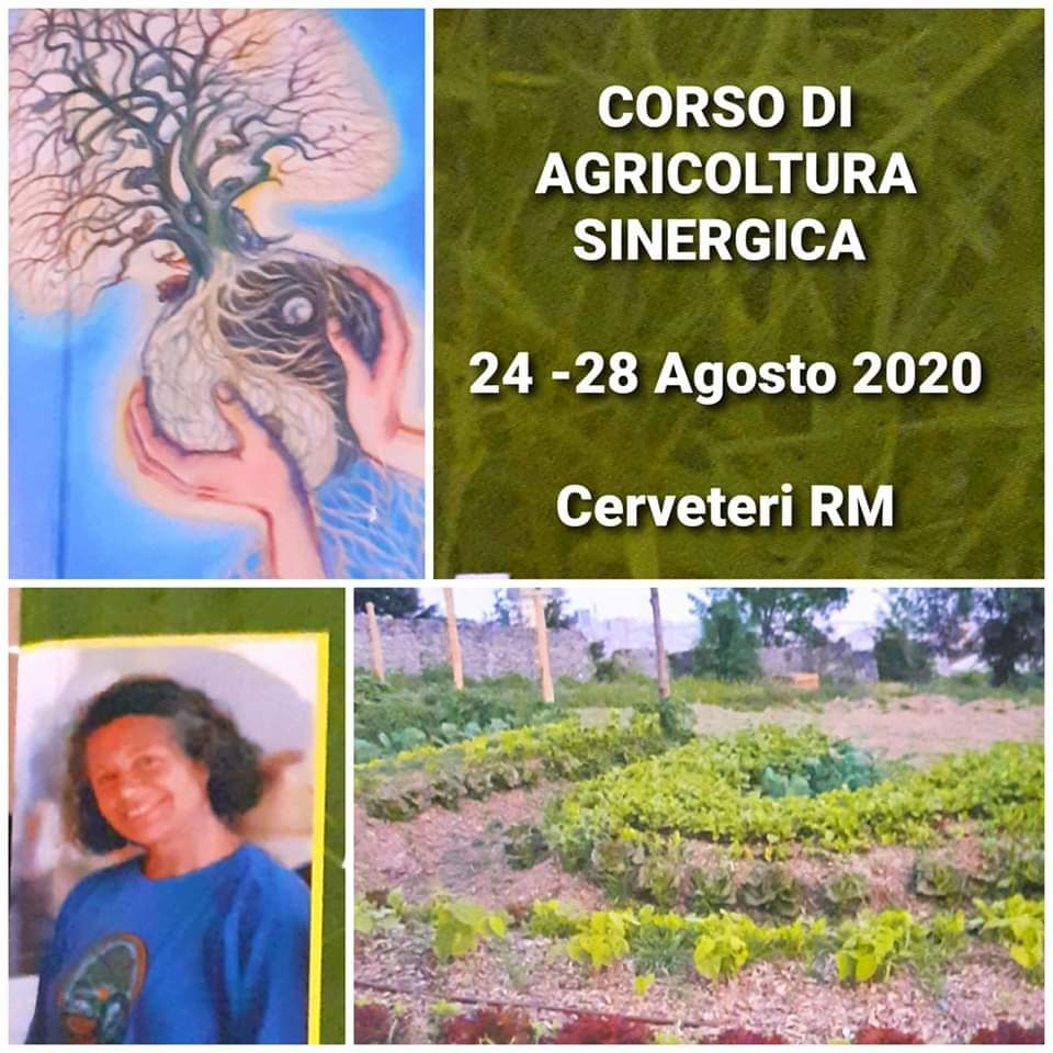 corso-di-agricoltura-sinergica-cerveteri-24-28-agosto-2020-orto-green-verde