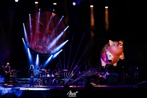 pig-flying-concert-lights-dark-musician