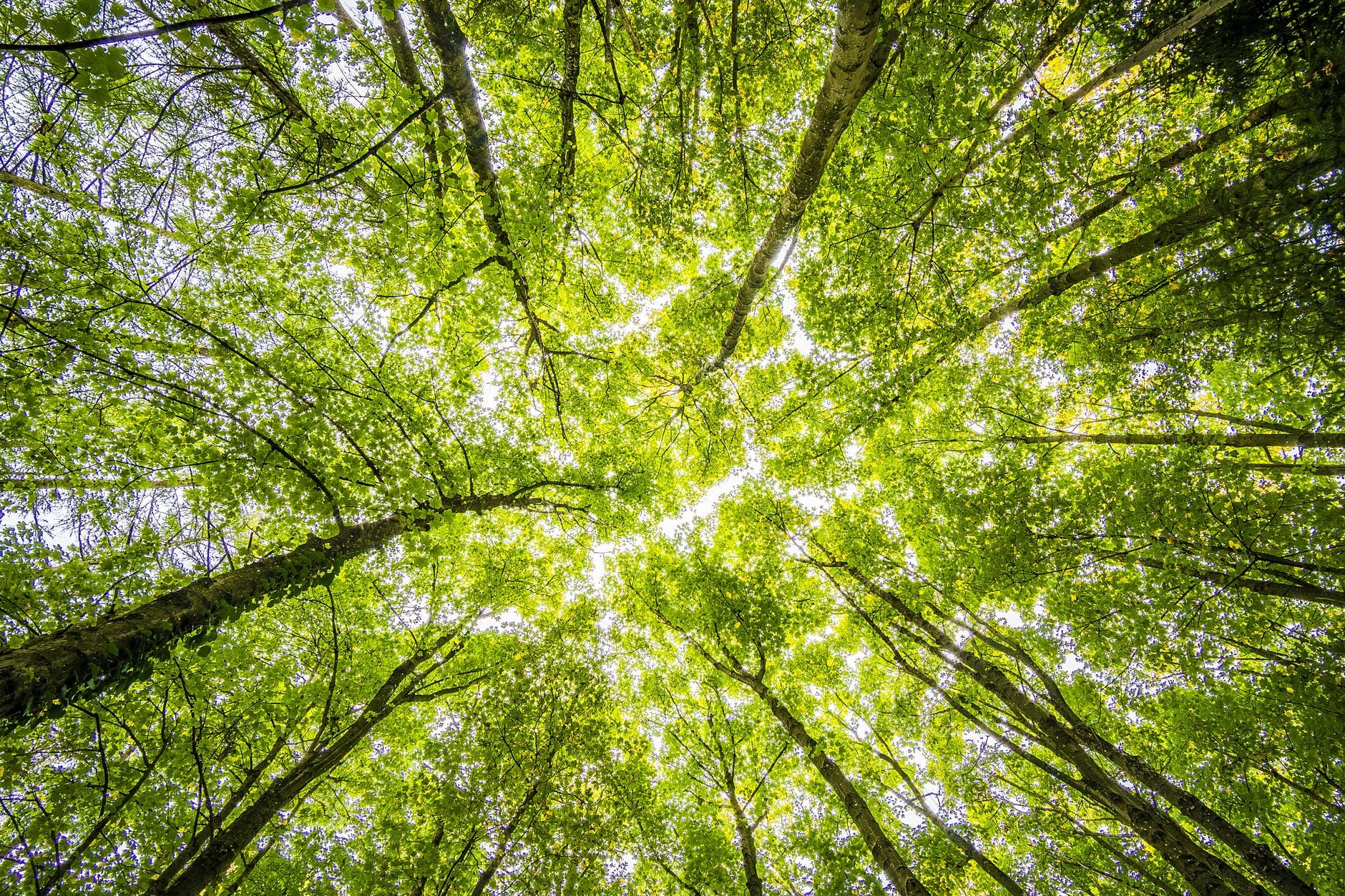 trees-green-alberi-luce-bosco-verde