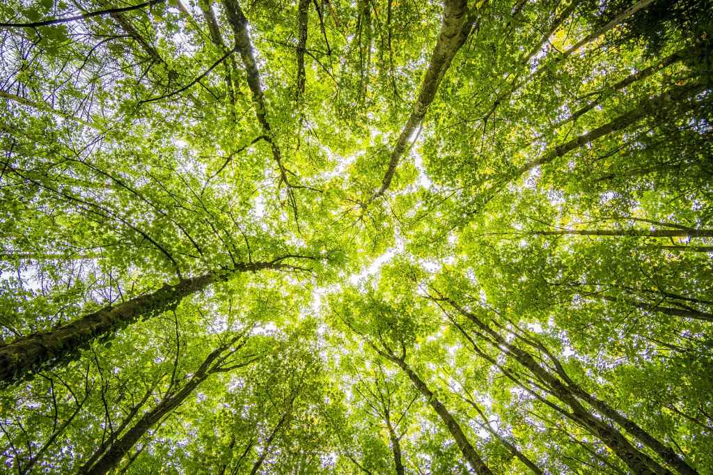 alberi-verde-trees-green