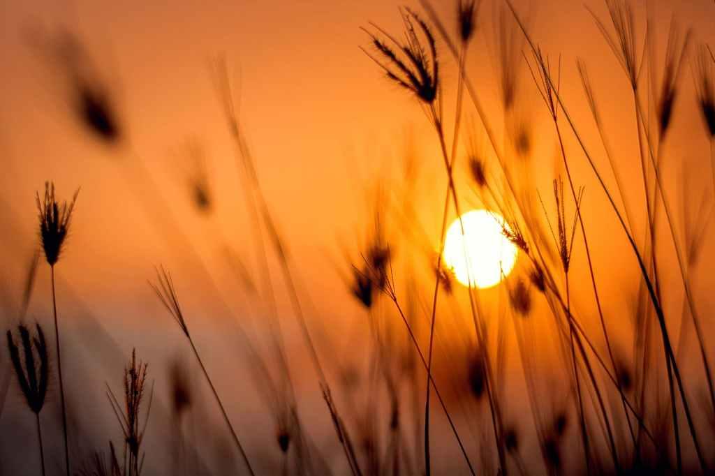 sole-sun-equinox-equinozio-autunno-orange-spighe-arancio-tramonto
