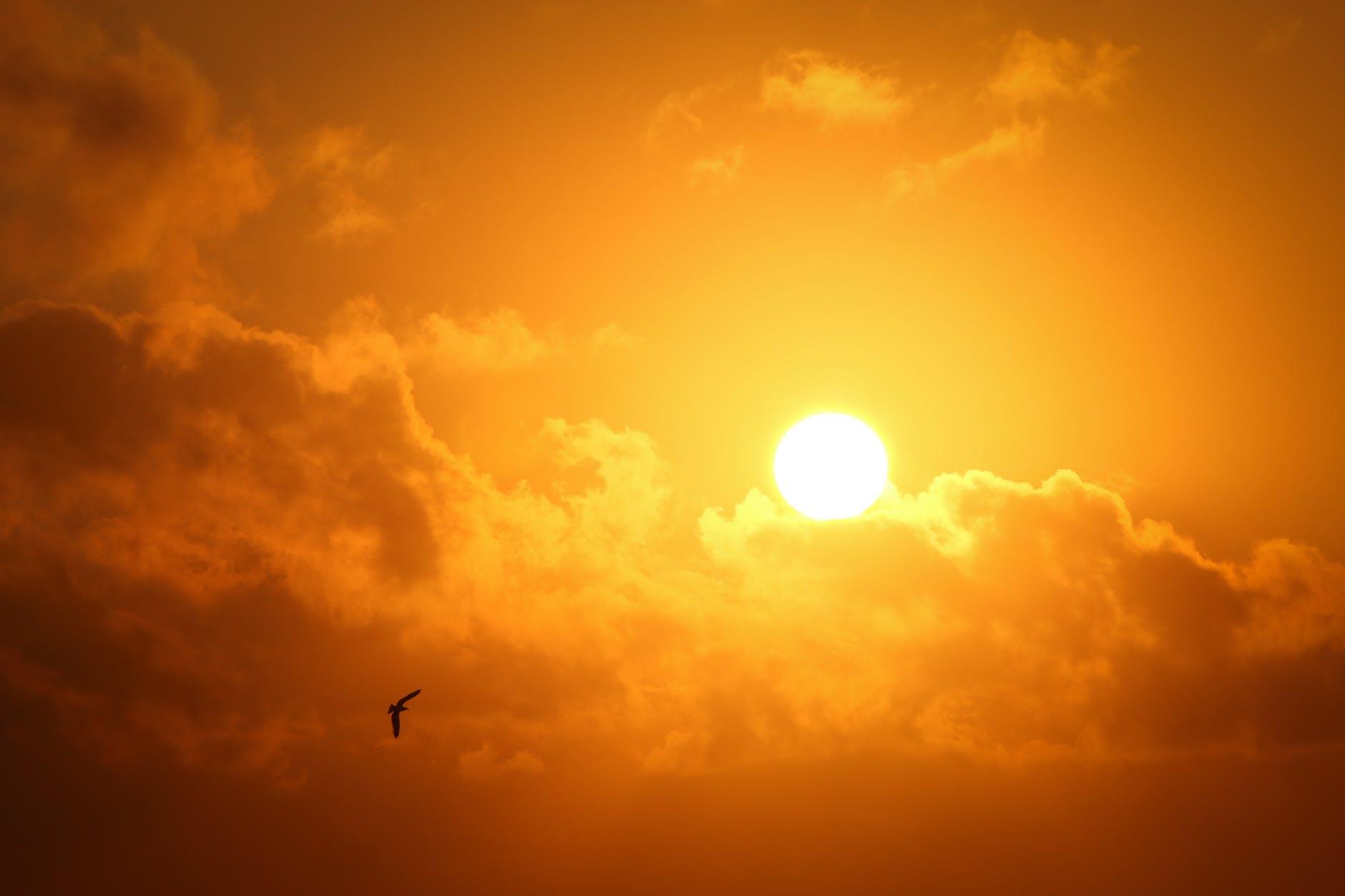 sun-clouds-bird-orange-yellow-sole-nuvole-uccello-solstizio-inverno-2020