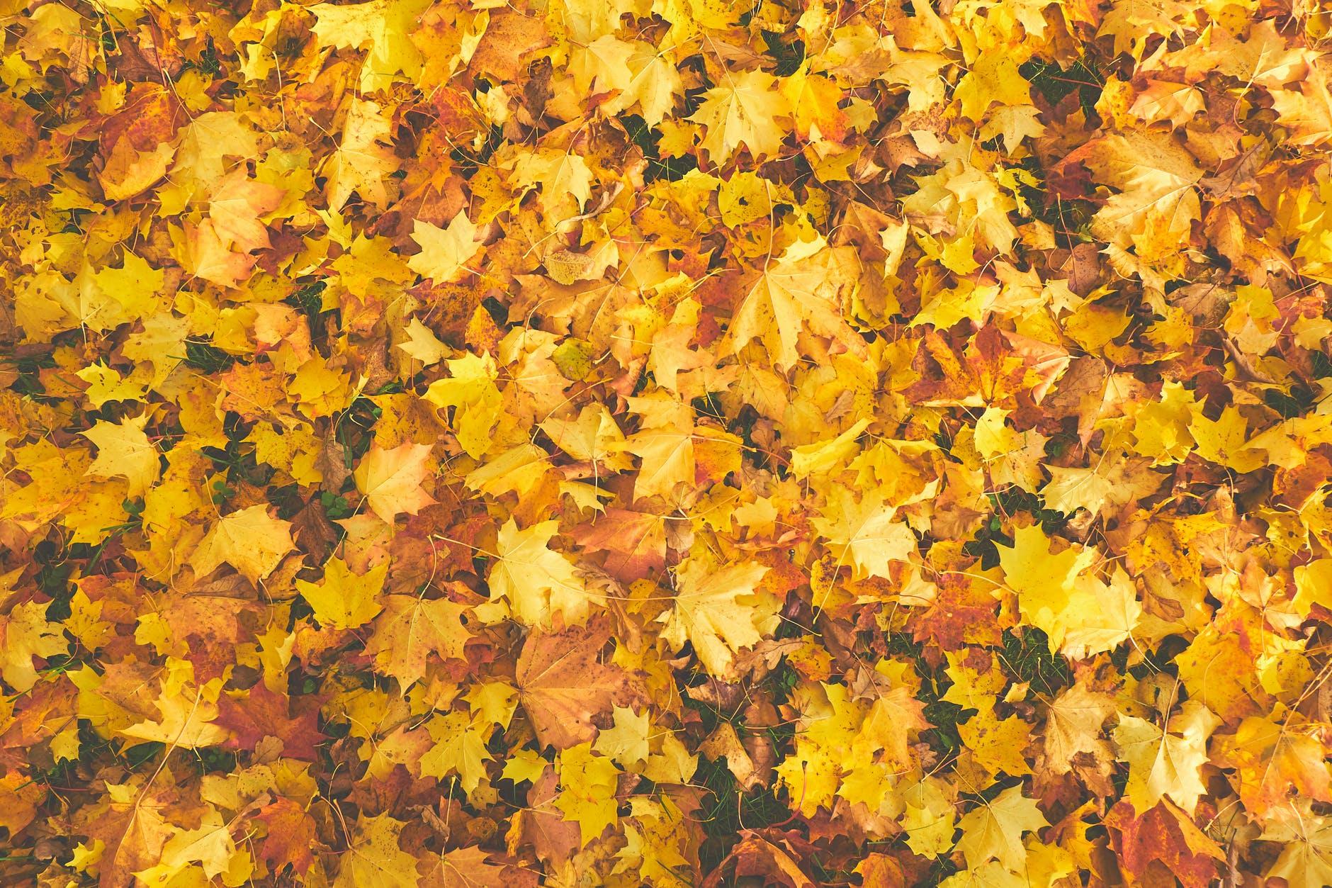 foglie-gialle-arancio-autunno