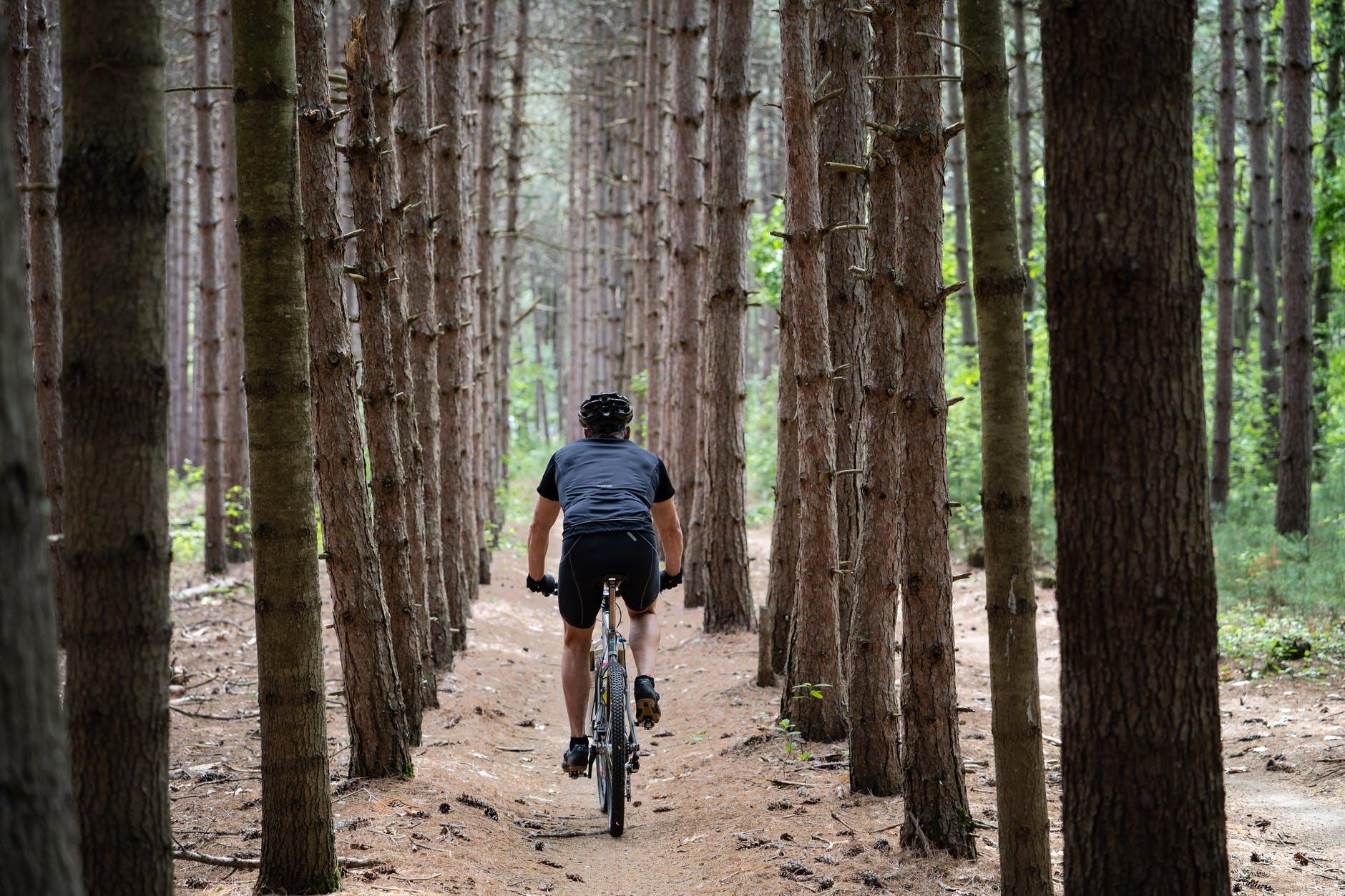 bike-bicicletta-alberi-bosco-cicloturismo