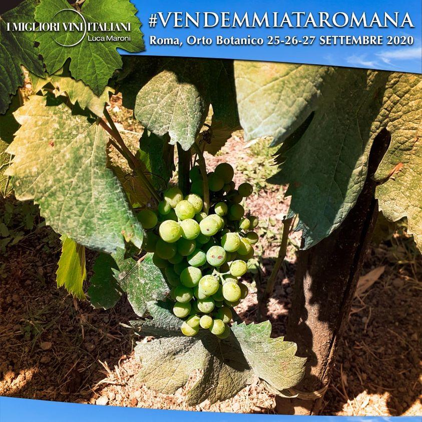vendemmiata-romana-orto-botanico-uva-grapes-chicchi