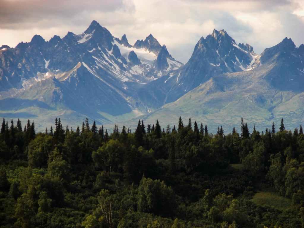 moutain-trees-green-montagna-bosco-alberi-verde