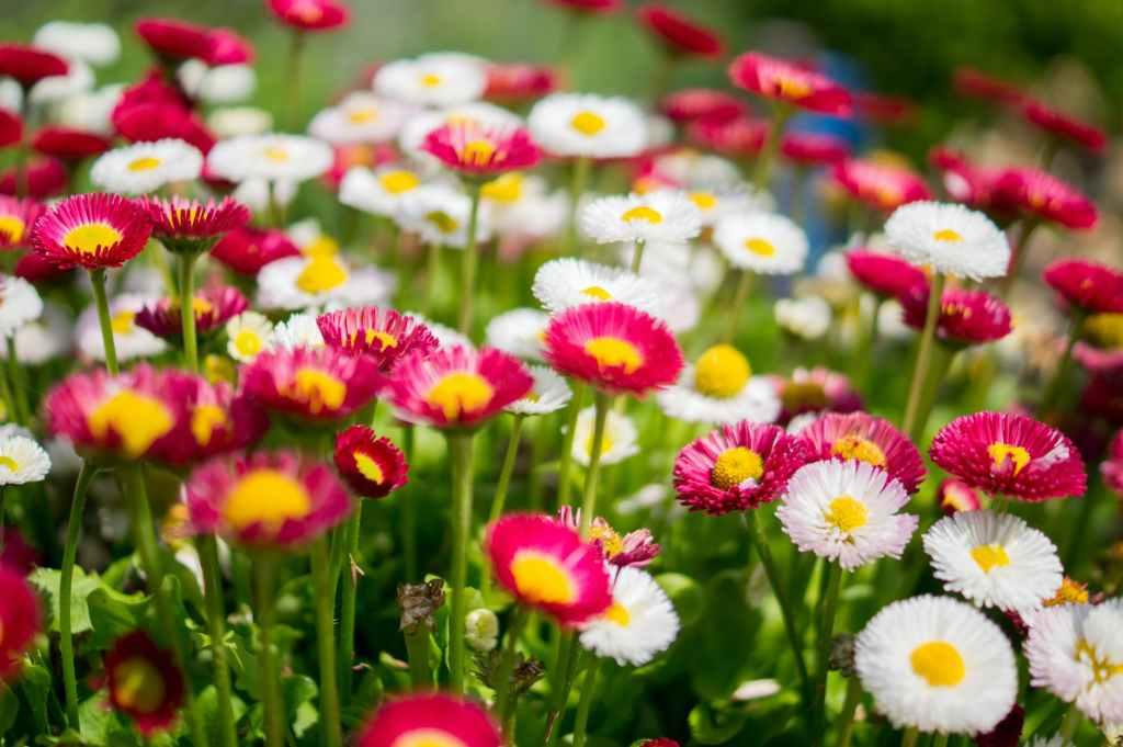fiori-flowers-giardino-garden