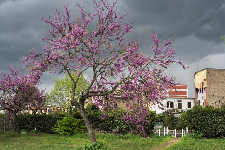 alberi-in-fiore-verde-cielo