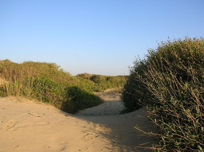 dune-spiaggia-vegetazione
