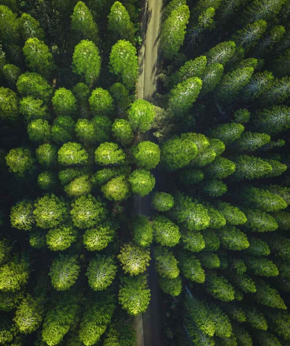 pini-pines-alberi