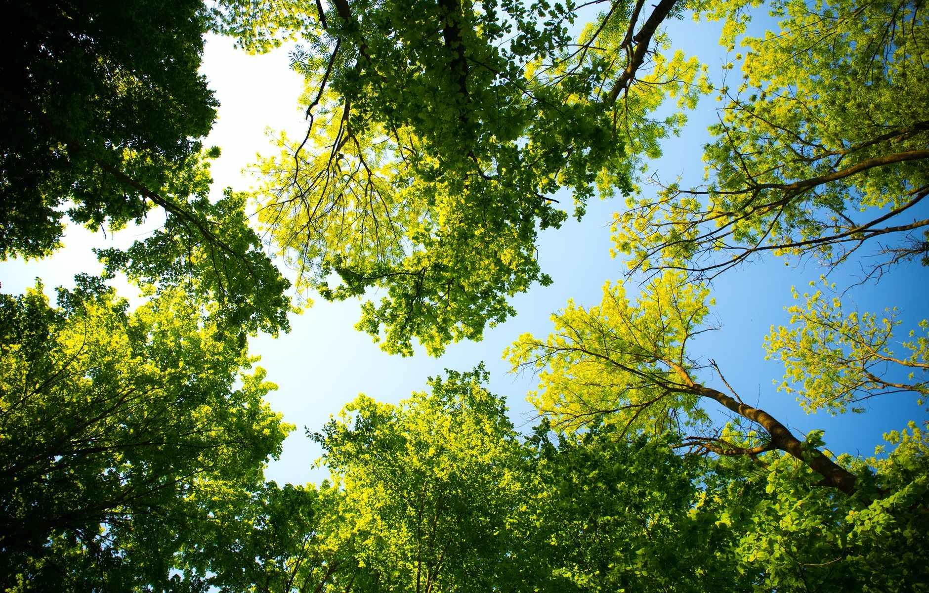 alberi-trees-foglie-cielo-sky-verde