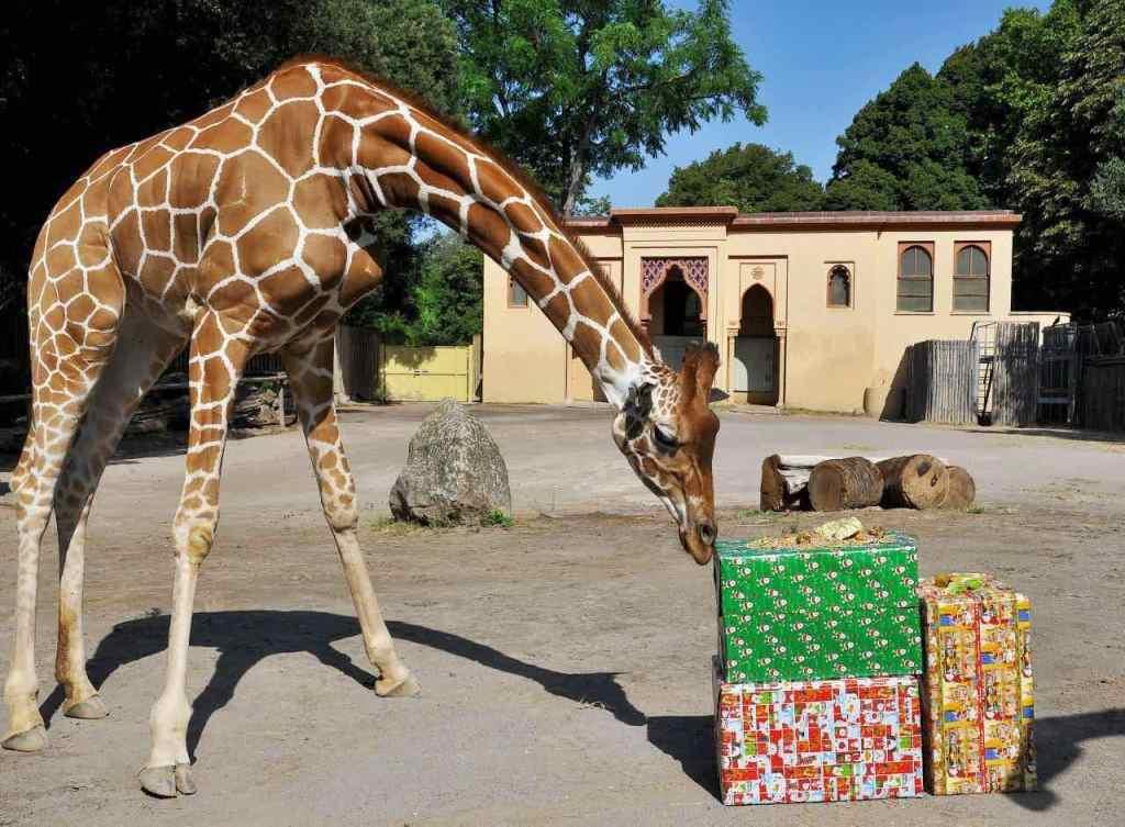 giraffa-regali