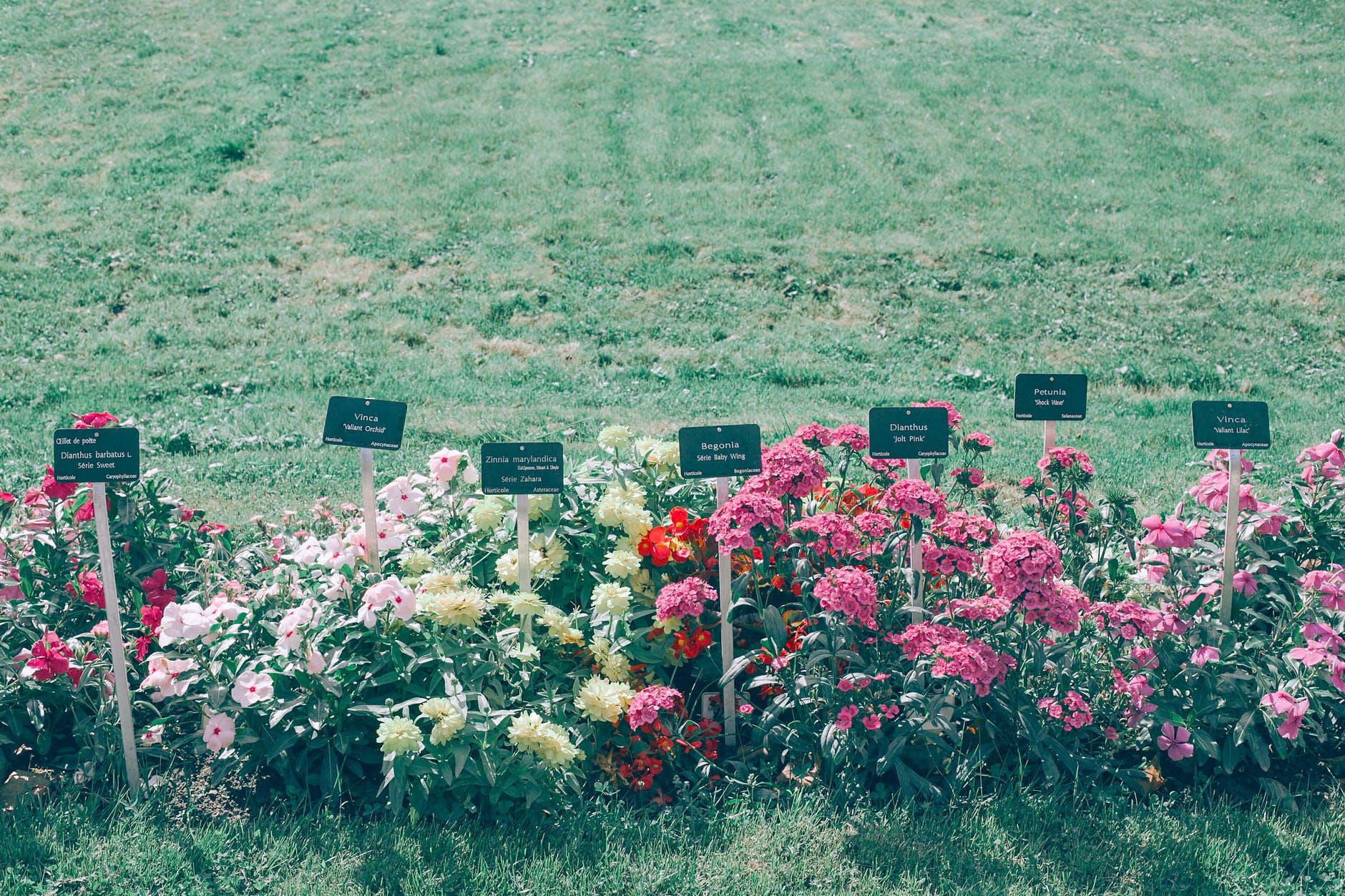 fiori-verde-parco