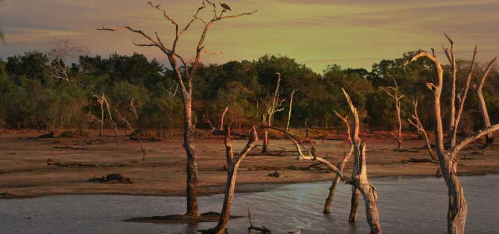 alberi-acqua-foresta-siccità