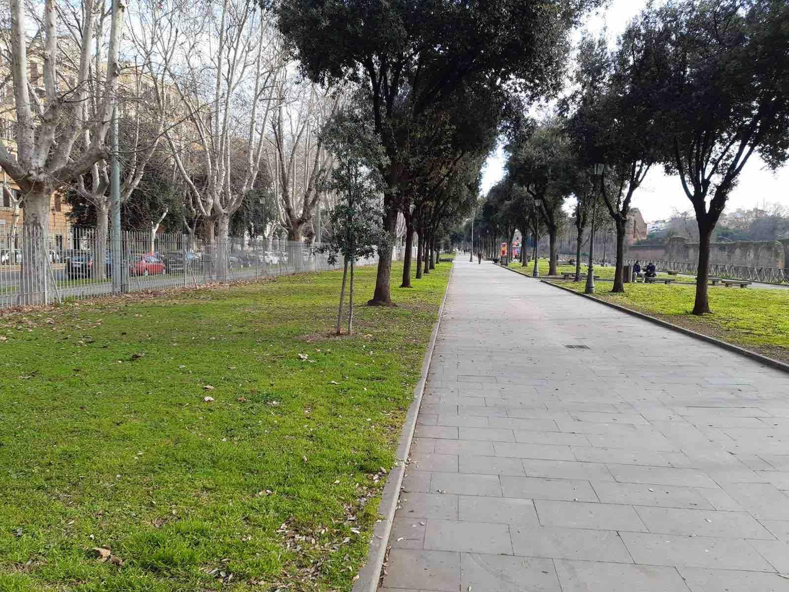 verde-alberi-viale