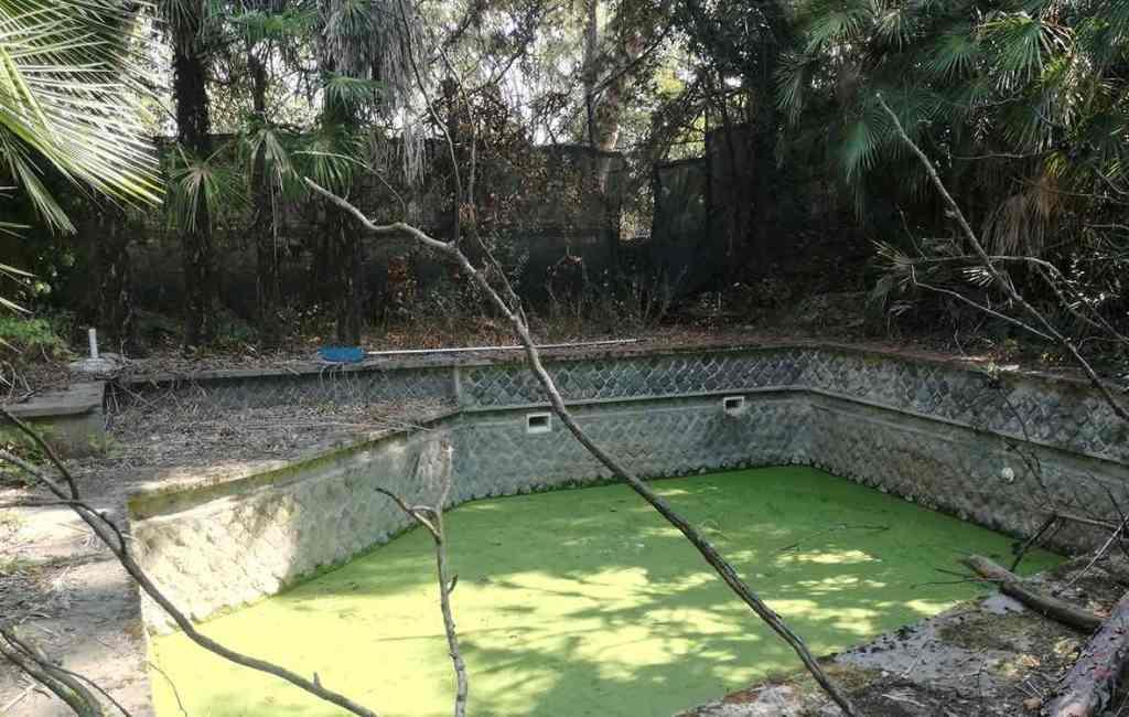 alberi-verde-vasca-ciottoli