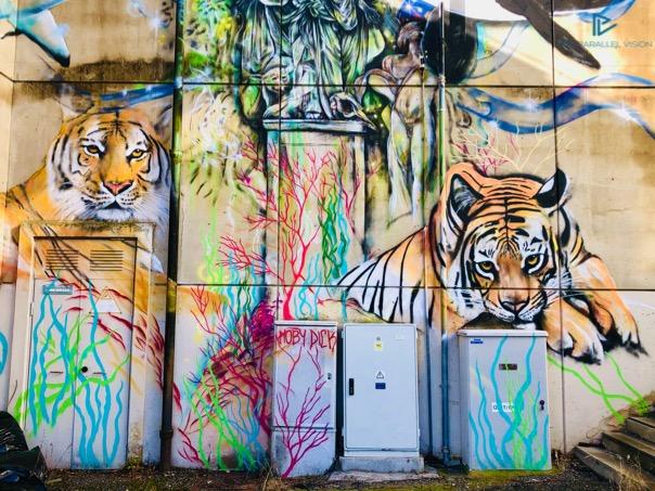 tigri-muro-scale