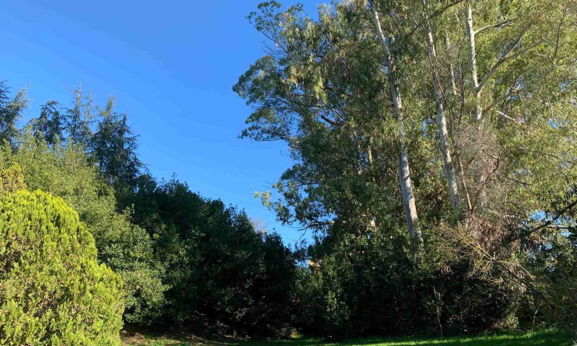 alberi-verde-cielo-prato