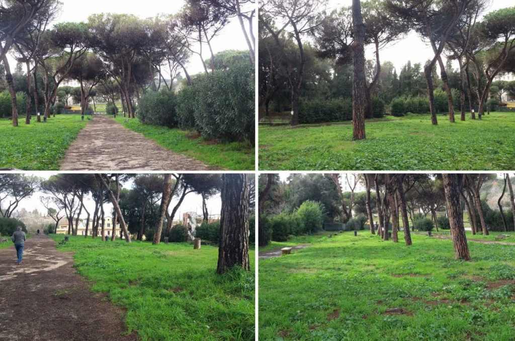 alberi-verde-viali-erba