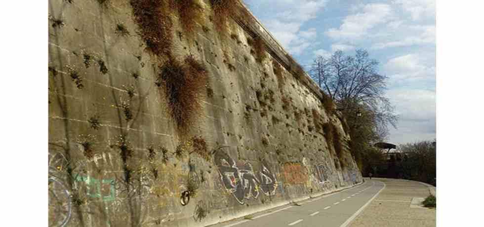 muro-cespugli-strada