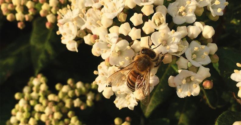 fiore-ape-bee-flower