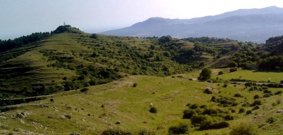 verde-colline-paesaggio-cespugli